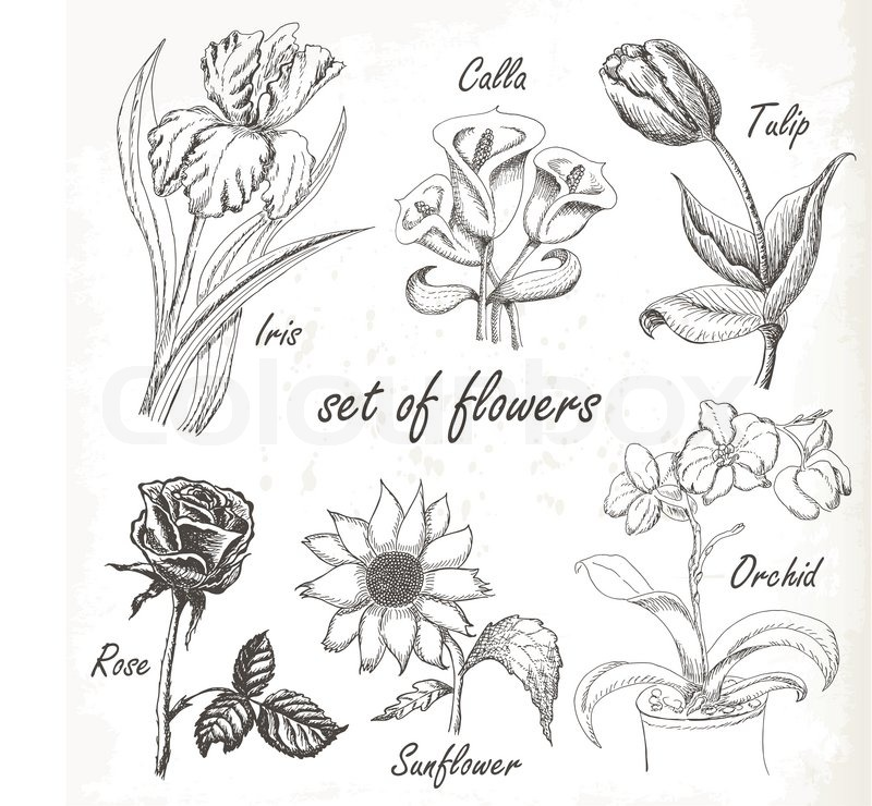 Vintage elegant wedding invitation with summer flowers. Black and ...