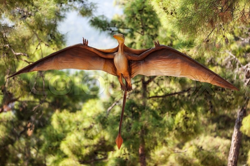 Pterodactyl prehistoric era wing dinosaur flying at - Dinosaur volant ...
