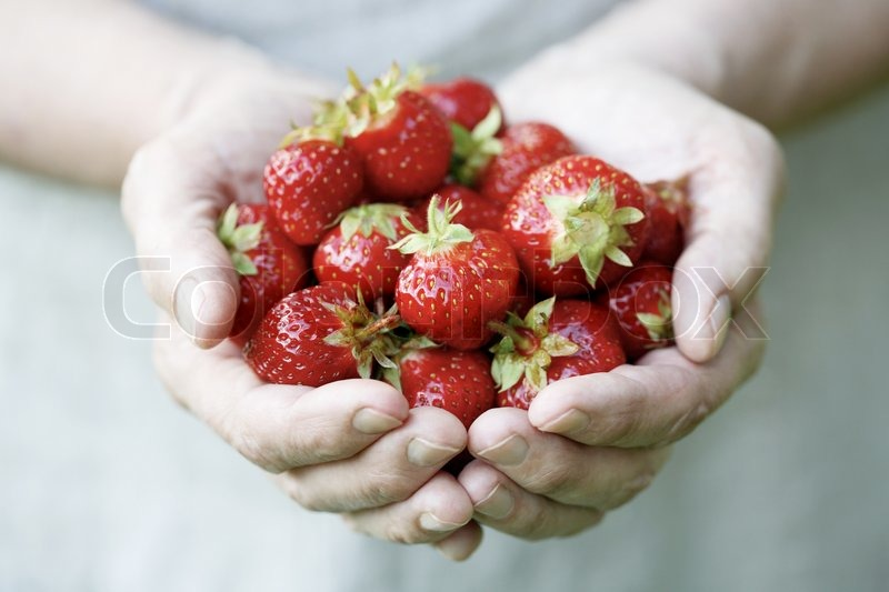 Stock image of 'Hands holding fresh strawberries'