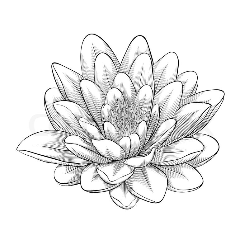 Beautiful monochrome, black and white lotus flower painted in ...