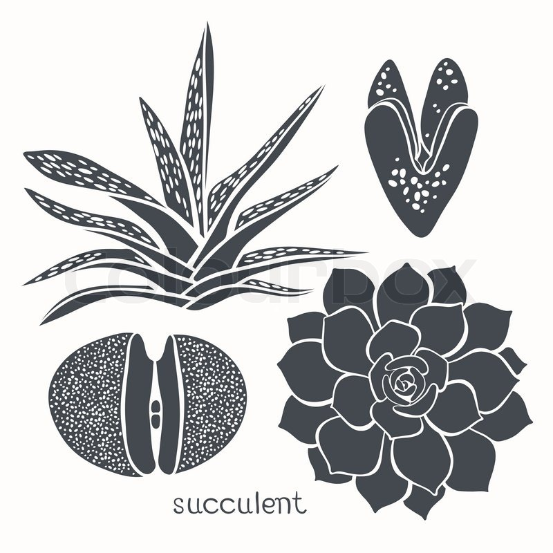 Graphic Set With Succulents Isolated On White Background