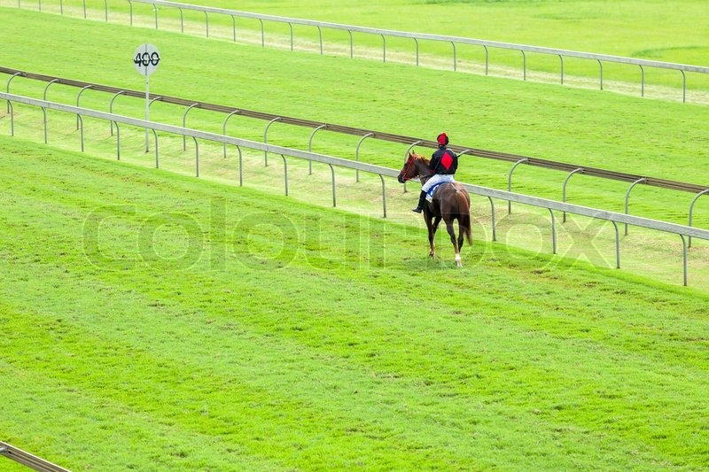 Horses jockeys unidentified walking down grass track to starting gate for horse race, stock photo
