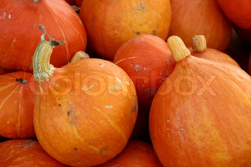 Stock image of 'Closeup picture of pumkins'