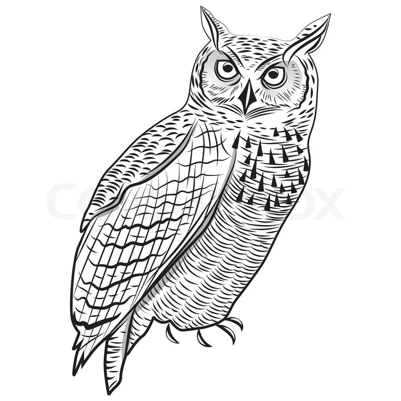 great horned owl outline thepixinfo