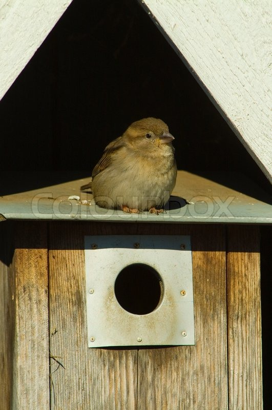 sperling haus vogel vogelhaus drau en heimat natur. Black Bedroom Furniture Sets. Home Design Ideas