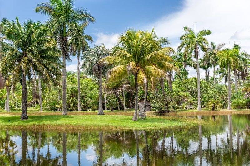 Fairchild tropical botanical garden miami fl usa beautiful palm trees with reflection in for Fairchild tropical botanic garden