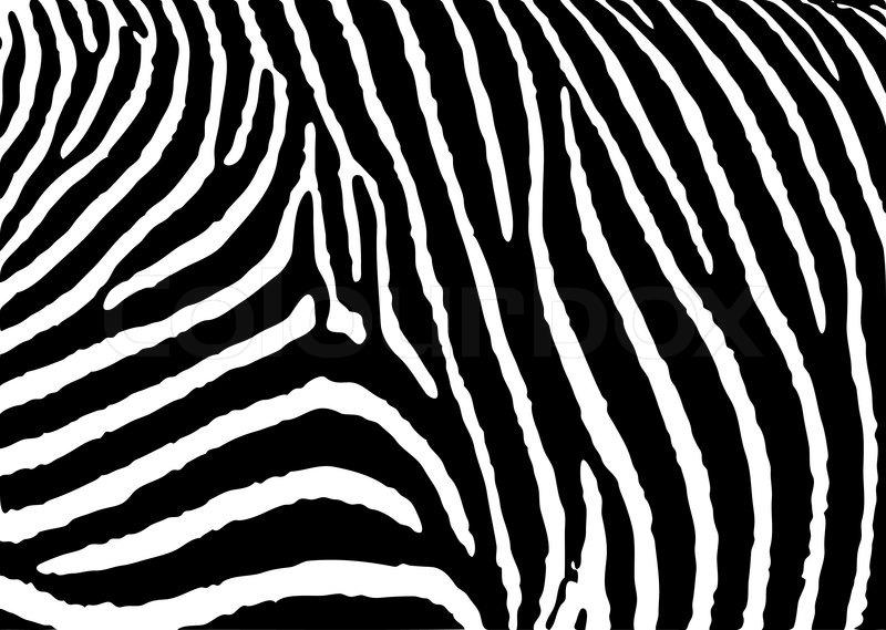 Aninimal Book: Black and white zebra pattern ... | Stock vector | Colourbox