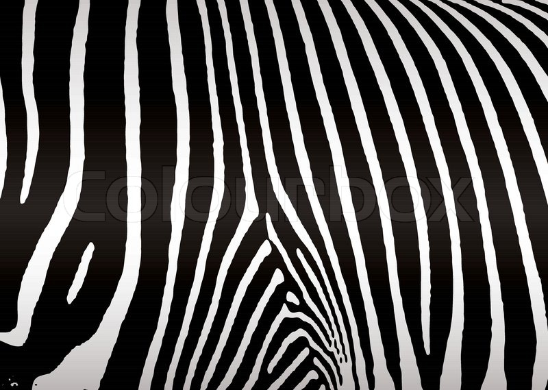 Stock vector of 'Black and white zebra skin or hide that makes ideal background'
