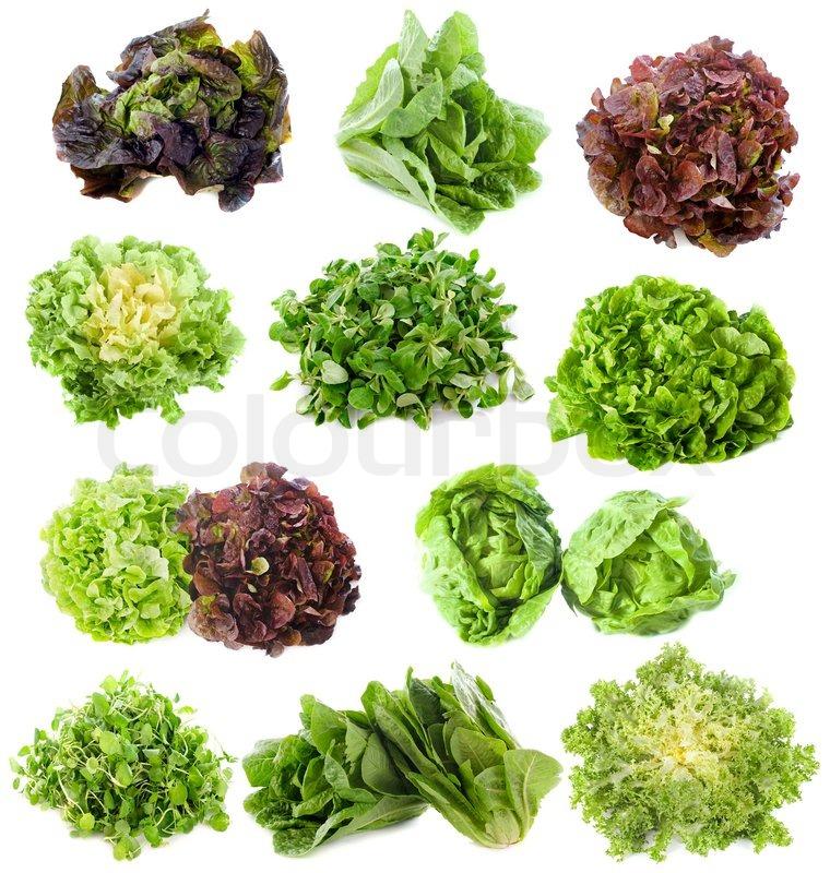 Салат листовой виды