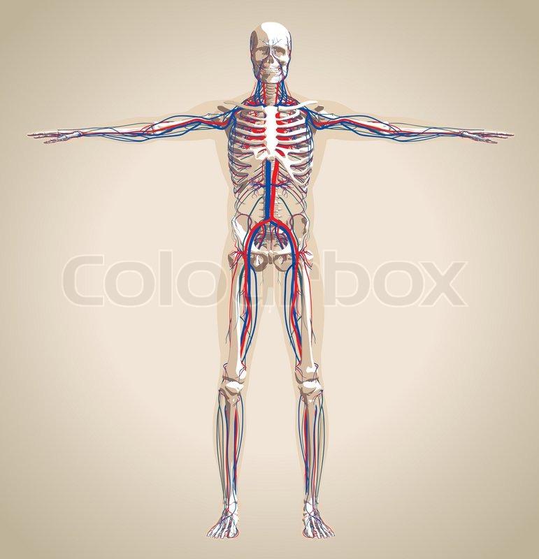 Großzügig Lage Von Femur Im Menschlichen Körper Bilder - Anatomie ...