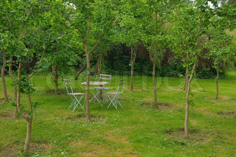 Green Landscape Romantic Nature Garden Outside Outdoor Yard Patio Park Suburban