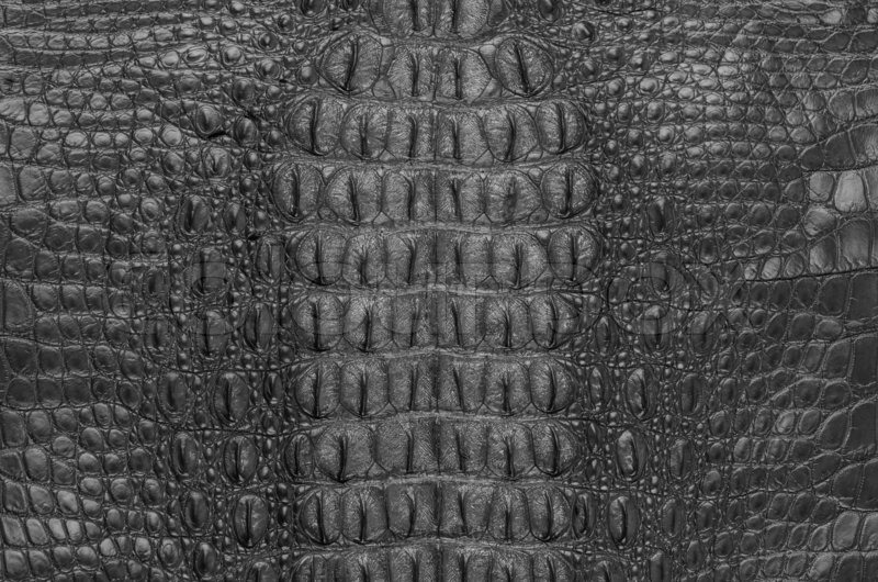 Crocodile bone skin texture background. This image of ...