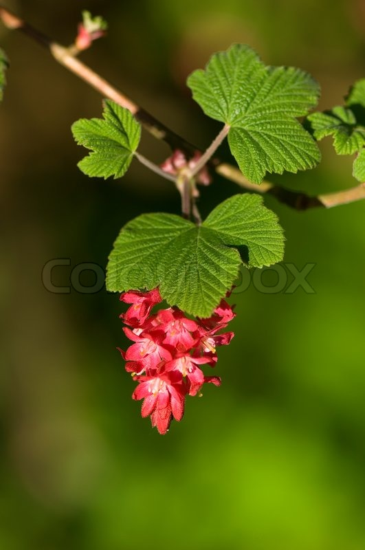 Red, green, nature, spring, beautiful, beauty, flora, blossom ...