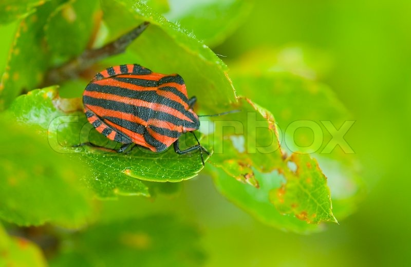 Striped bug insect red garden outdoors nobody macro nature
