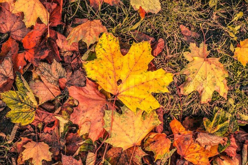 flotte farver Efterårsblade i flotte farver | stock foto | Colourbox flotte farver