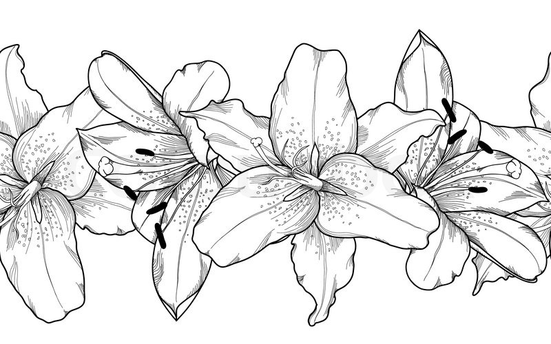 Line Drawing Of Lily Flower : Beautiful monochrome black and white stock vector