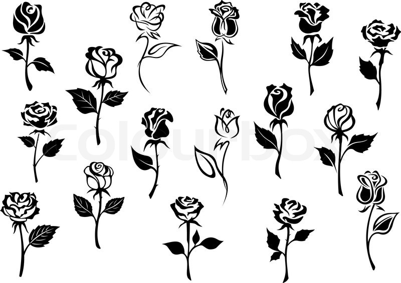 Black And White Elegance Roses Flowers Stock Vector Colourbox