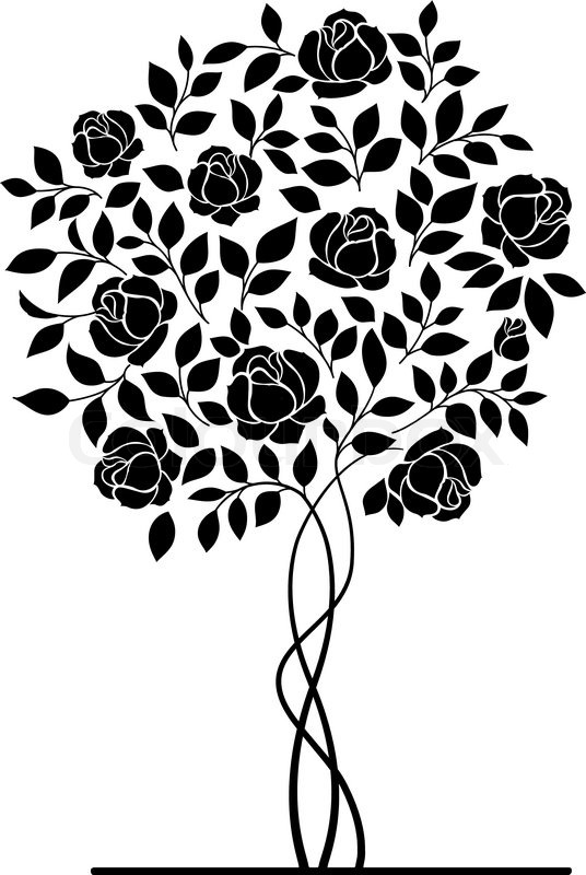 Rose Garden Bush Isolated Over White Stock Vector