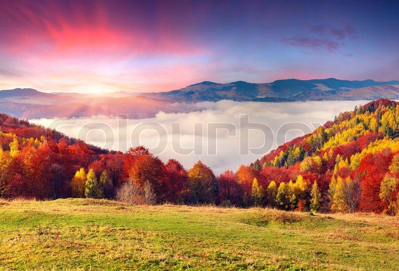 Colorful autumn morning in the Carpathian mountains. Sokilsky ridge, Ukraine, Europe, stock photo