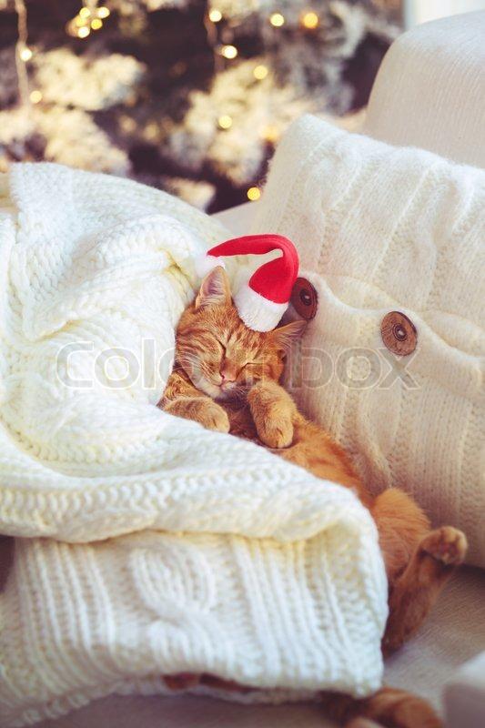 Lovable Ginger Cat Wearing Santa Claus Hat Sleeping On