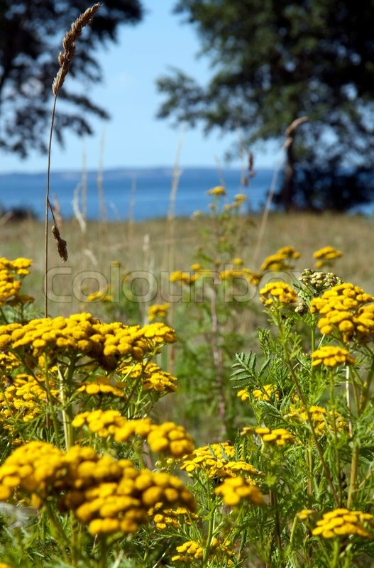 Stock image of 'summer, tree, meadow'