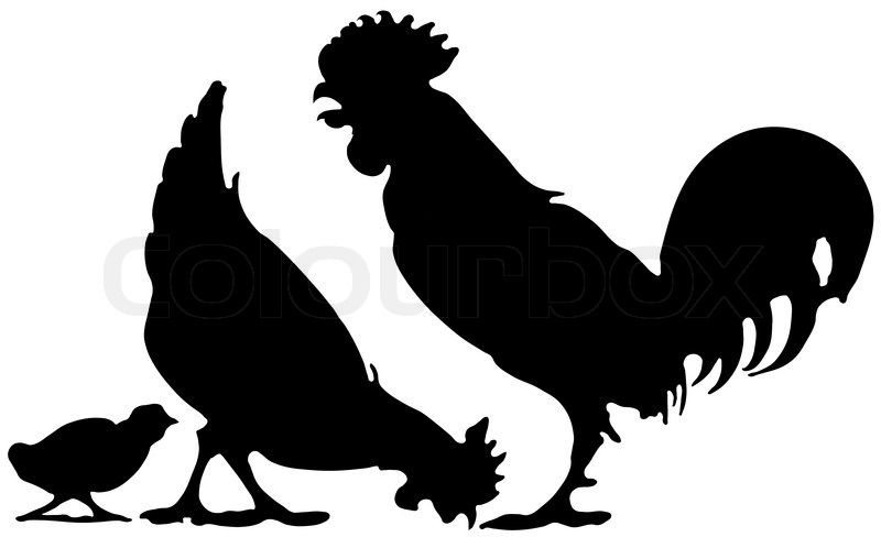 Chicken family | Vektorgrafik | Colourbox