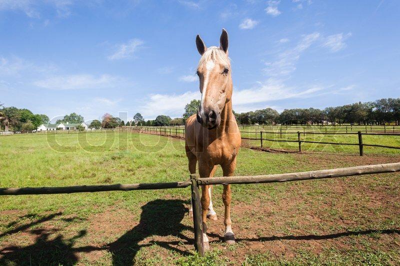 Horse portrait of equestrian animal closeup portrait farm field, stock photo