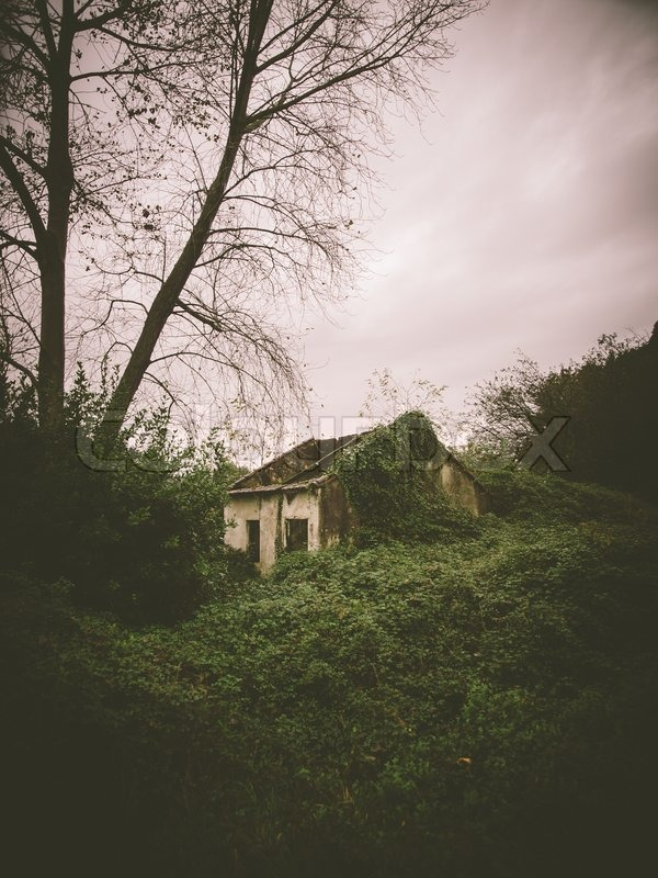Abandoned house in the middle of the forest in a rainy day, stock photo