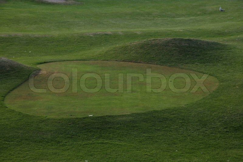 Sport, green golf course and a seagull in summertime, stock photo