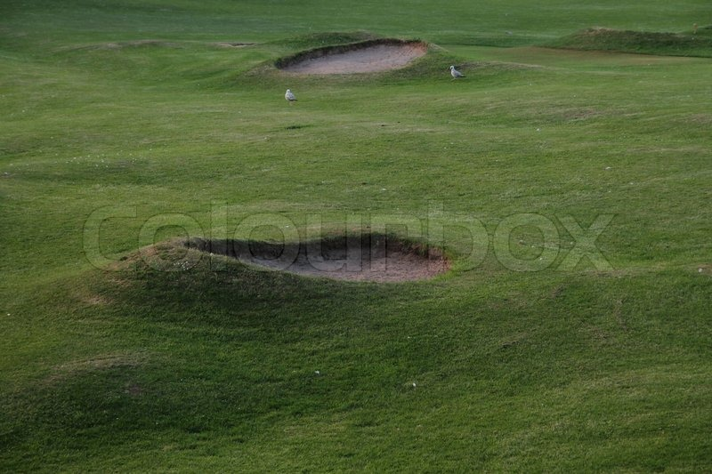 Sport, green golf course and seagulls in summertime, stock photo