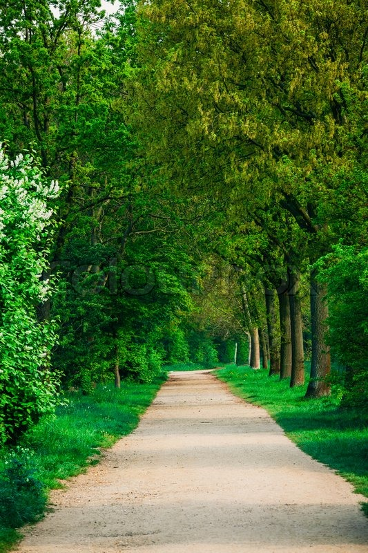 Beautiful green forest. forest park ... | Stock image | Colourbox