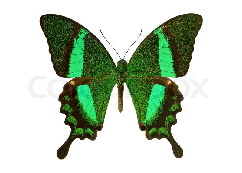 Stock image of 'Butterfly'