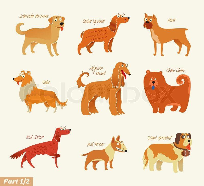Dog breeds. Bull Terrier, Chow Chow, Collie, Saint Bernard, Cocker ...