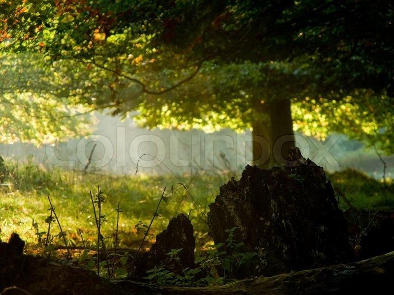 Fairytail forest Stock Photo Colourbox