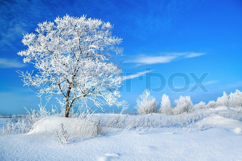 Beautiful rural winter landscape with a one tree and the blue sky, stock photo