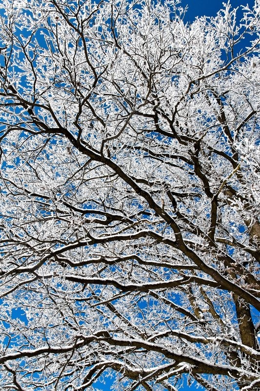 Stock image of 'A landscape with hoar frost, frost and snow on tree in winter.'