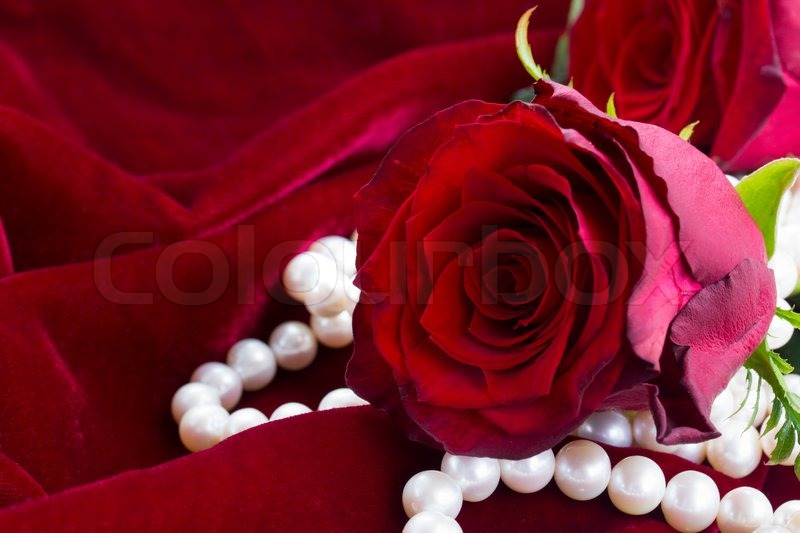 One fresh red rose with pearls on scarlet velvet ...
