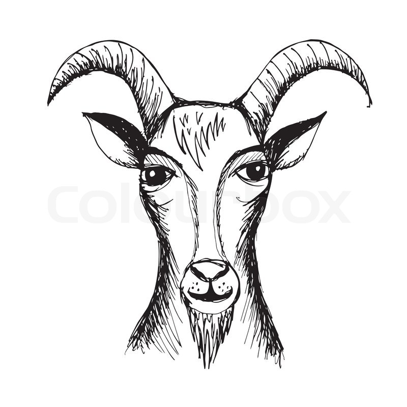 Mountain Goat Head Drawing Goat Face Side Drawing