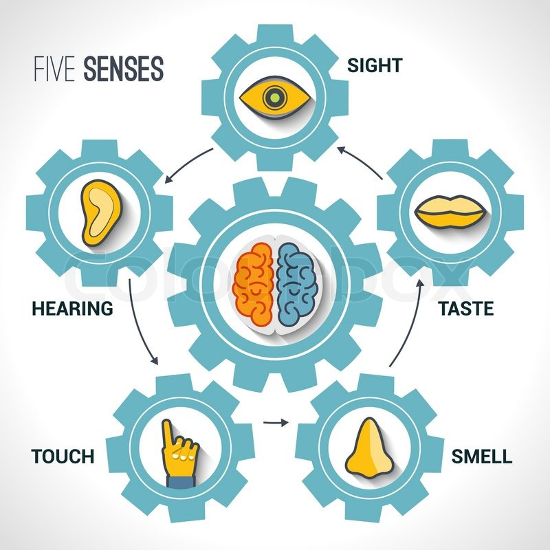 Five senses concept with human organs icons and brain in for 5 senses in architecture