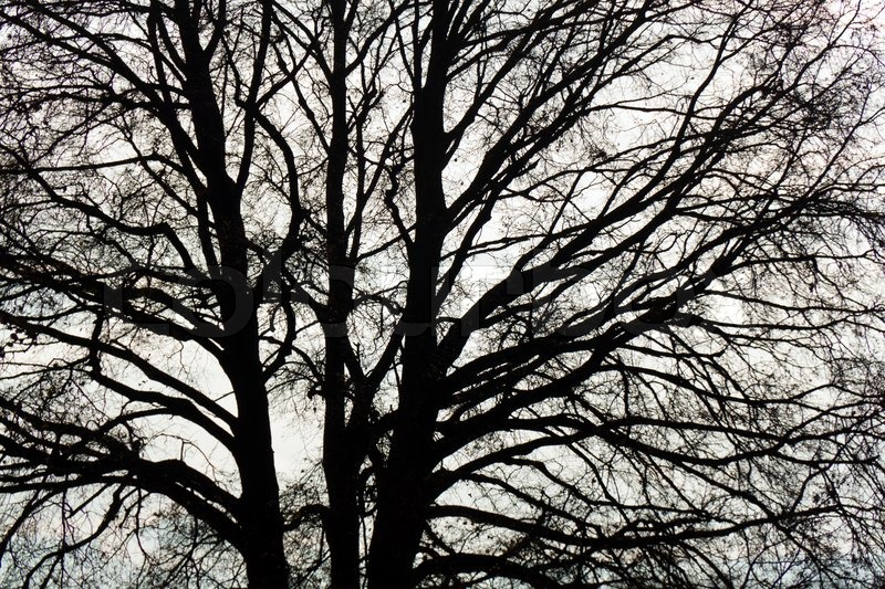 Stock image of 'The bare twigs and branches of a tree in winter'