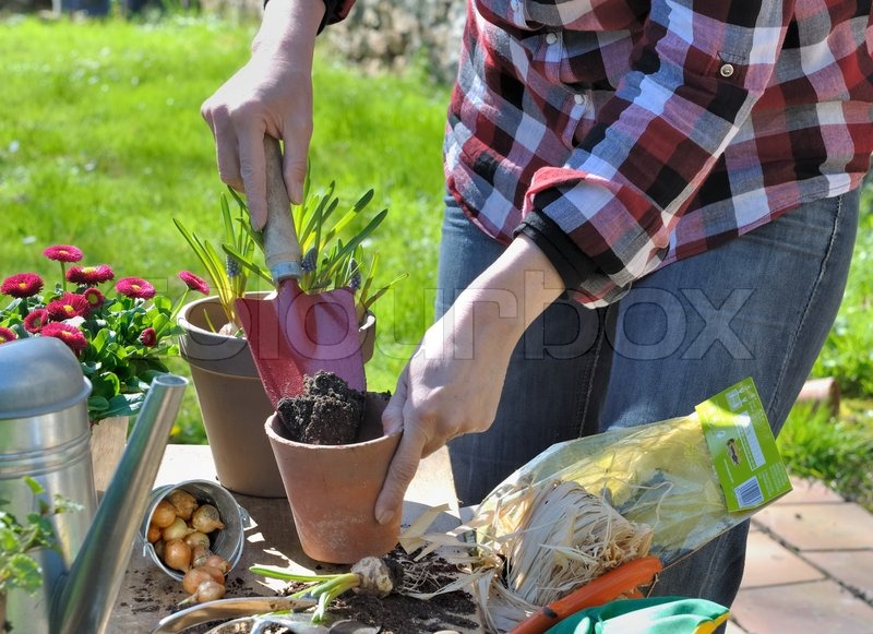 Hand Of A Woman With Tools In His Garden Front Of A Table With Gardening  Accessories | Stock Photo | Colourbox