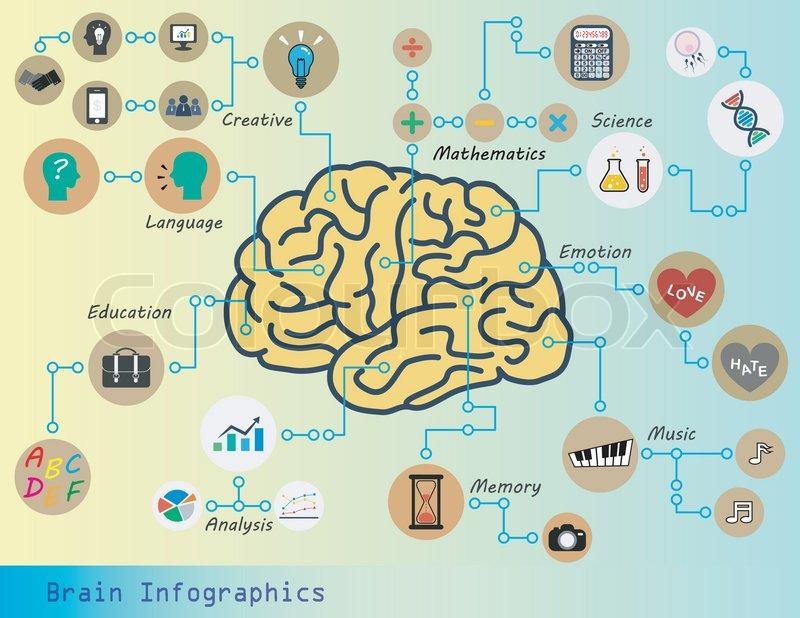 Brain Infographics Brain Function Stock Vector Colourbox