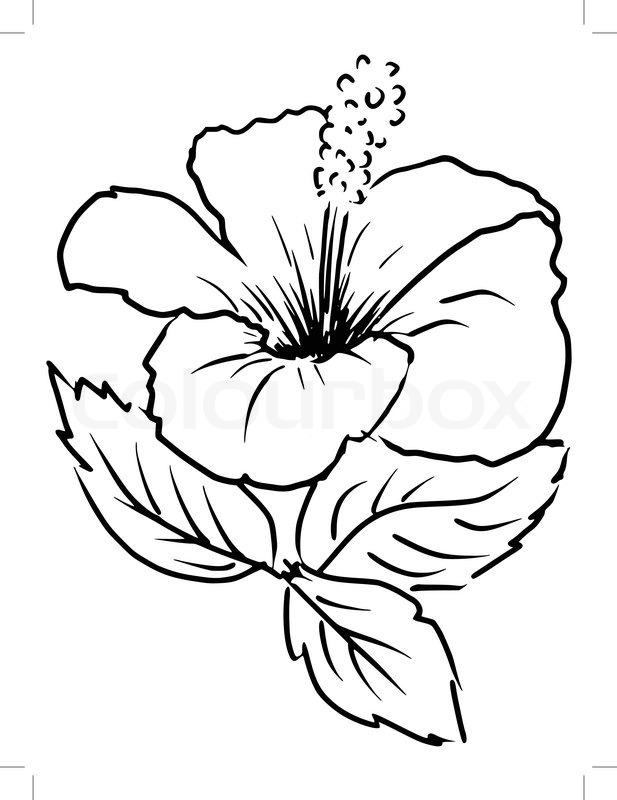 Cartoon Flower Line Drawing : Sketch cartoon illustration of stock vector colourbox