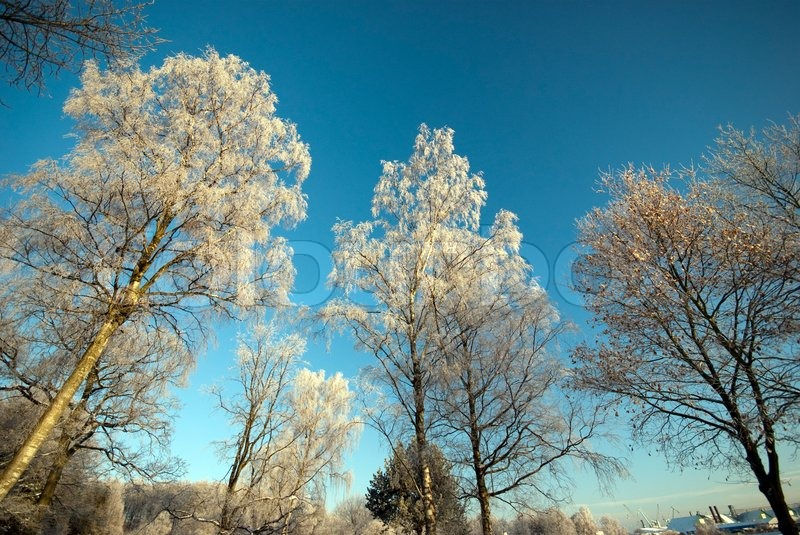 Frozen Trees On Winter Field And Blue Sky Cold Landscape