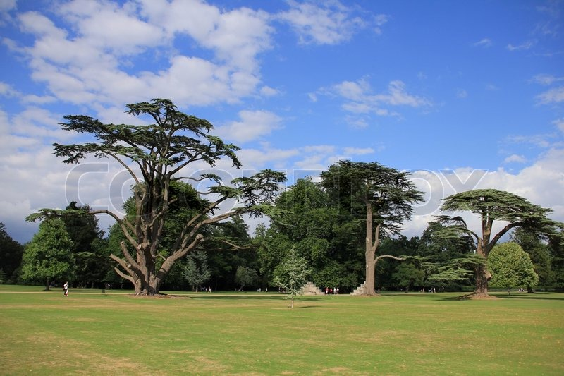 In the garden in the park of osborne house stand wonderful for Garden trees england