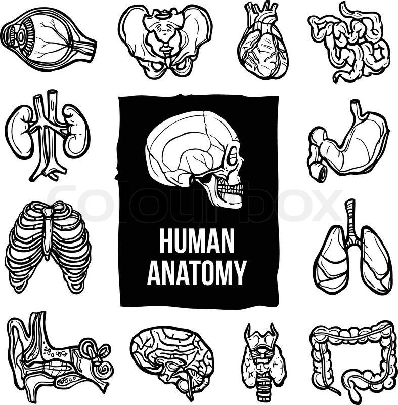 Human Anatomy Internal Body Organs Sketch Decorative Icons Set