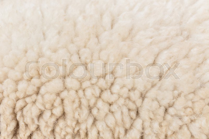 Wool sheep closeup for background, stock photo