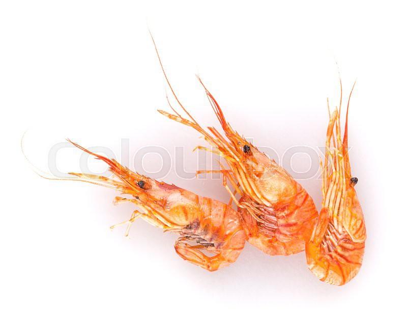 Supplier Shrimp Mail: Shrimp Isolated On White Background