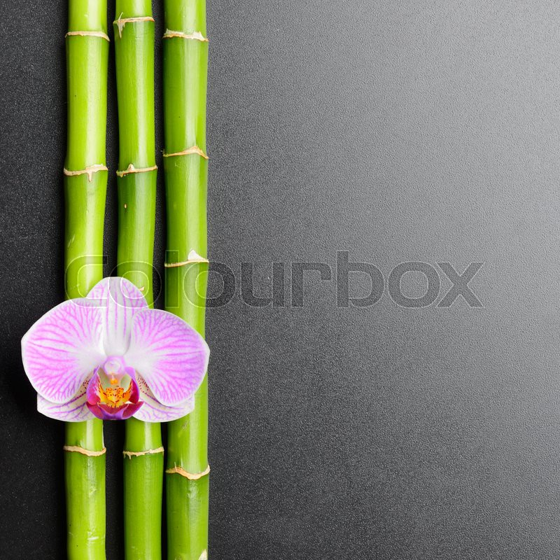 Asian orchid and bamboo
