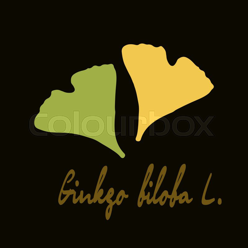 Stock vector of 'Ginkgo biloba stylizes leaves.  Silhouette of ginkgo leaves'